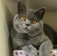 Hugo: The Boss: The Cat Bowl healthy dehydrated pet cat dog treats