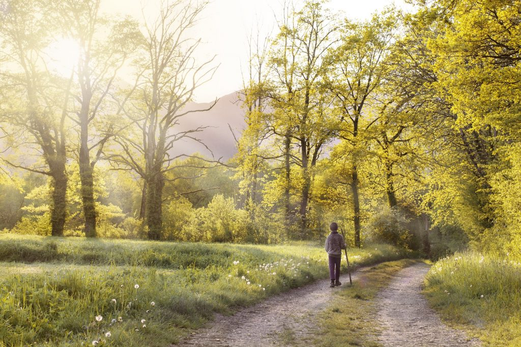path-1577192_1920