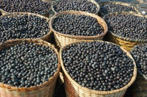 Acai the small superfruit from the brazilian amazon which is very rich in naturally nutrients and antioxidants.