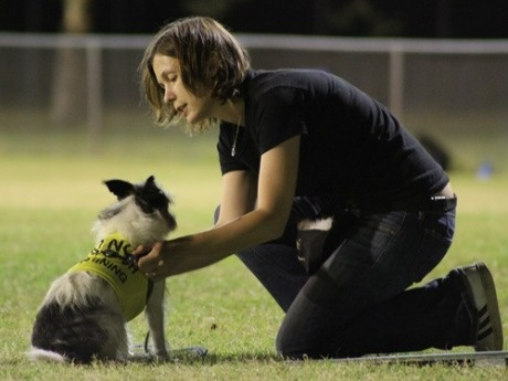 Marianne has helped thousands of dogs and their owners to achieve their dog training goals