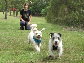 Trained dogs are happy dogs!