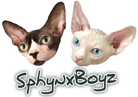 SphynxBoyz - Online cat clothing store for breeds such as Sphynx, Devon Rex, Cornish Rex, Siamese, Orientals, etc.