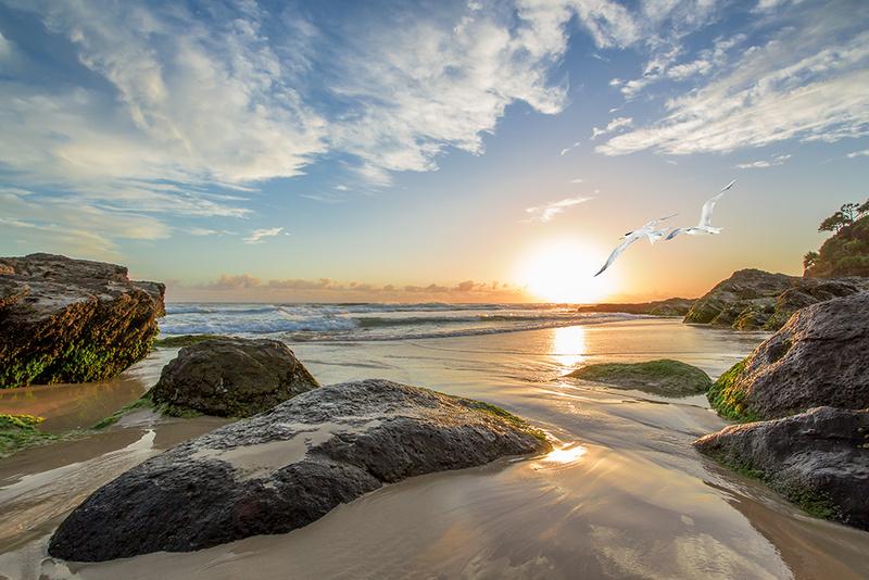 Rainbow Bay 'Snapper at Sunrise' Art Print