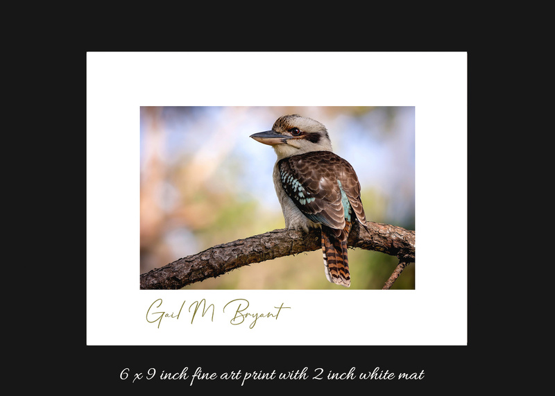 Laughing Kookaburra 'Loving Nature'  Art Mount
