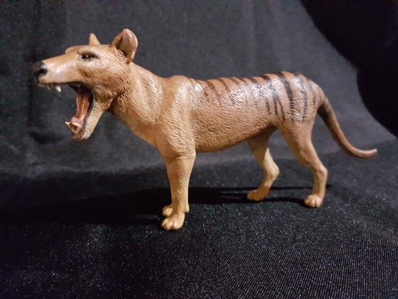 Thylacine Male